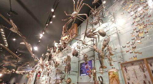 Museum Exhibit Lighting Truss